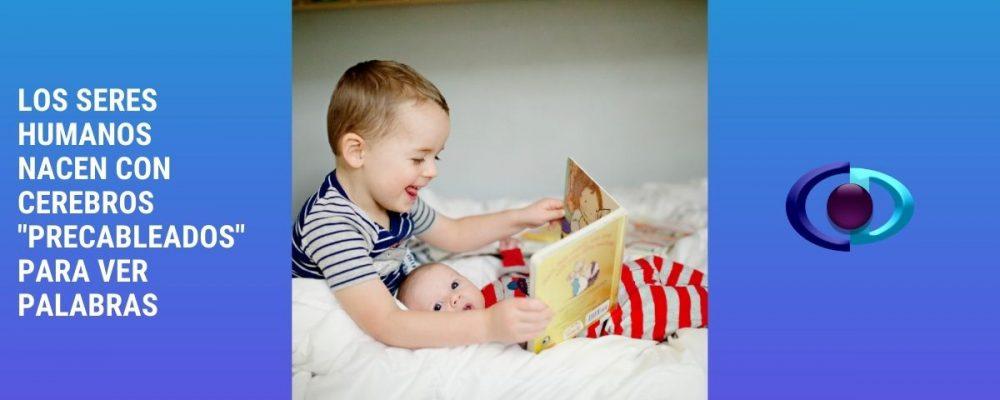 Los seres humanos nacen con cerebros «precableados» para ver palabras
