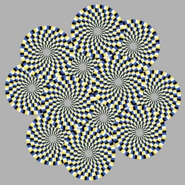 Las ilusiones ópticas explicadas a través de los ojos de una mosca