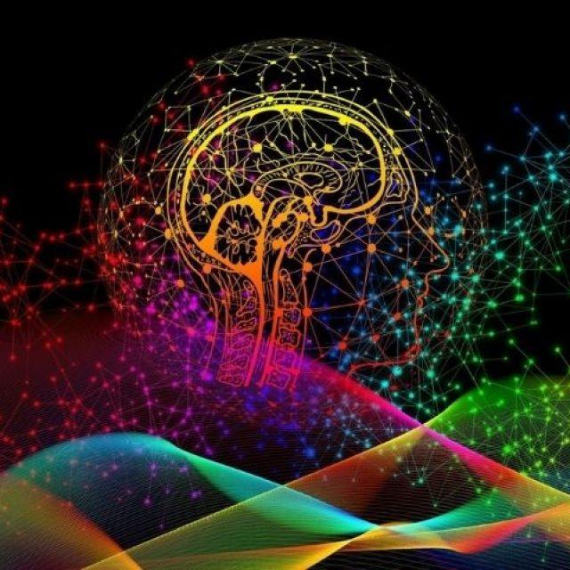 Señales cerebrales decodificadas que determinan lo que ve una persona