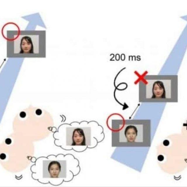 Los bebés reconocen las imágenes rápidas igual que los adultos