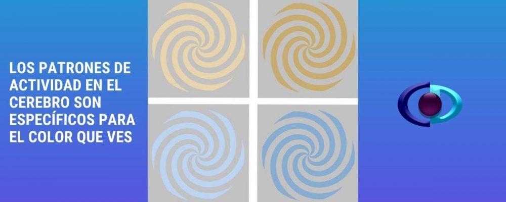 Los patrones de actividad en el cerebro son específicos para el color que ves